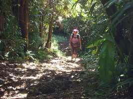 Montée,yann, tete allègre , basse terre nord, Guadeloupe