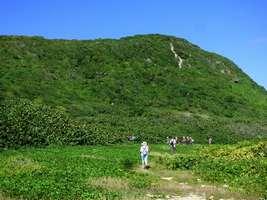 Moule-bois baron,morne, grande terre nord, guadeloupe