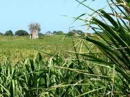 moulin boismorin, beautiran, petit canal, grande terre, guadeloupe