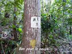 arbre, balade, dos d`ane, basse terre, gaudeloupe, antilles