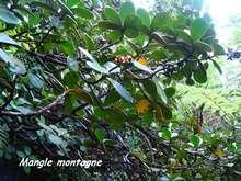 balade armistice, basse terre, arbre, foret humide, guadeloupe