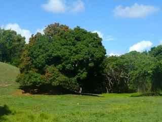 balade rivière audoin moule grande terre guadeloupe savane