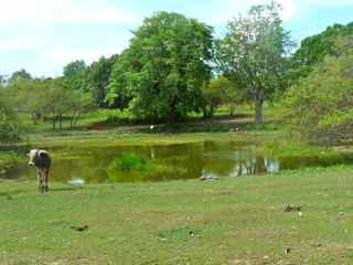 balade rivière audoin, moule, Grande terre, Guadeloupe, mare