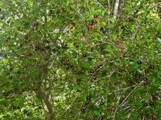 balade morne morel, les saintes, arbuste foret seche, guadeloupe