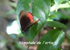 balade rivière plessis, papillon, basse terre, guadeloupe, antilles