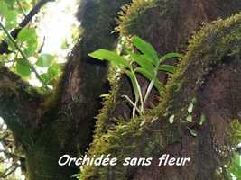 orchidée, Trace V Hugues, B Terre