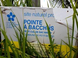 pancarte pointe à bacchus petit bourg Guadeloupe