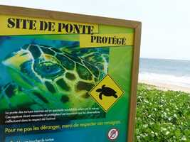 Protection des tortues marines, Deshaies