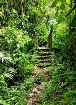 passerelle Grand etang Guadeloupe