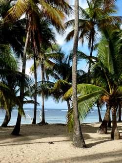plage cocotiers Bois jolan ste anne Guadeloupe