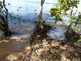 érosion par la mer, port Louis, grande terre, guadeloupe