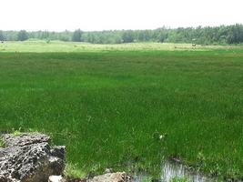 plaine Grippon, morne à l`eau, grande terre, guadeloupe