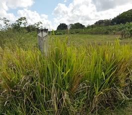 balisage sentier à dr Pte bacchus Pt Bourg Guadeloupe