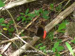 balade barre de cadoue grande terre, papillon , guadeloupe
