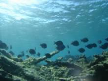 paysage sous marin antilles benthos récif