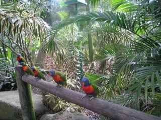 oiseaux foret tropicale humide antilles