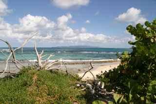 plage saline ecosysteme littoral grande terre gaudeloupe