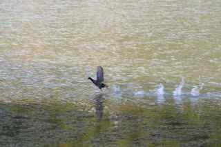 oiseau étang foret tropicale humide antilles