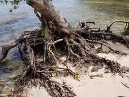 racine erosion port louis grande terre guadeloupe