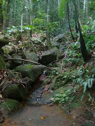 ravine, trace 36 mois, ste rose, basse terren guadeloupe