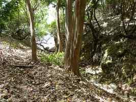 ravine, littoral gosier, saline-pt havre