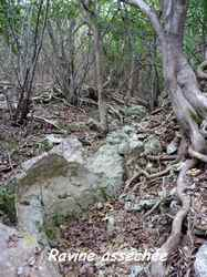 ravine, TGT4, grande terre, guadeloupe