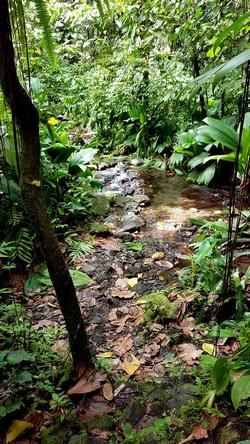 ravine de l`as de pique Grand etang Guadeloupe