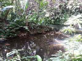 ravine grand Boucan, cascade Bis, Ste Rose, gaudeloupe