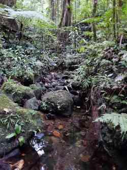 Rivière Grande d`Anse, Galion