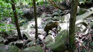 ravine salée, tour houelmont, basse terre sud, guadeloupe