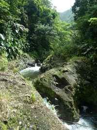 rivière vx habitants, cote sous le vent, Guadeloupe