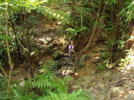 ravine yann , tete allegre, baille argent , basse terre nord, guadeloupe