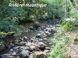 rivière moustique, tete allegre, basse terre nord, guadeloupe