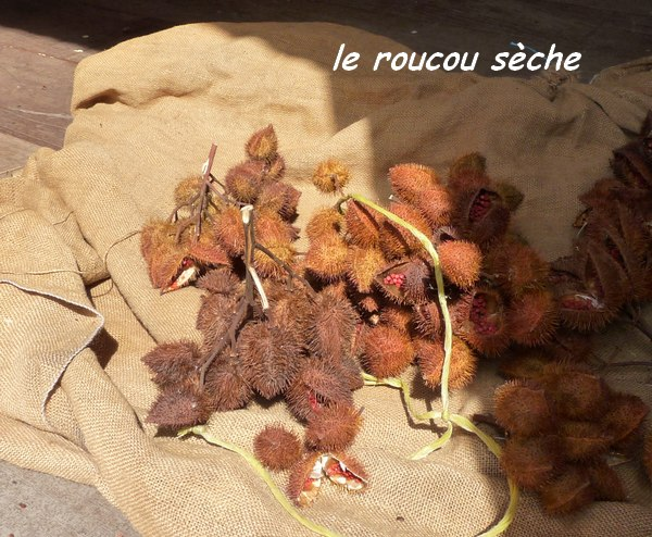 roucou sèche ,grivelière L