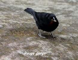oiseau, chutes carbet, basse terre sud, guadeloupe