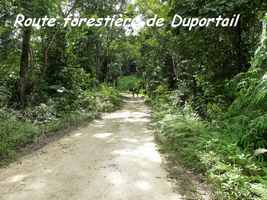 Route forestière , Contrebandiers, Guadeloupe