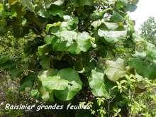 arbre foret seche, ecosysteme tropiacl, guadeloupe,