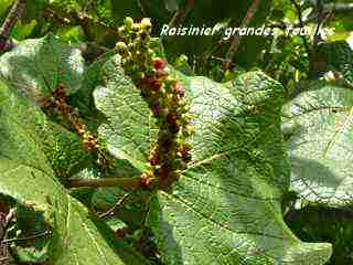 arbre foret seche, balade barre de cadoue, grande terre, guadeloupe