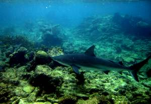 poisson , pelagos, fonds marns, ecosysteme marin, guadeloupe, antilles