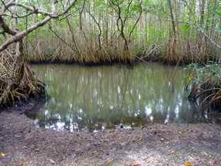 rivière audoin, moule, grade terre, guadeloupe, mangrove