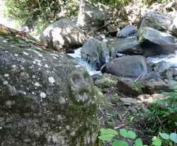 balade rivière plessis, roche gravée, basse terre, guadeloupe, antilles