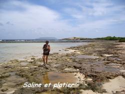 platier, littoral, pointe des chateaux, guadeloupe