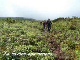 savane ananas, Trace V Hugues, B Terre