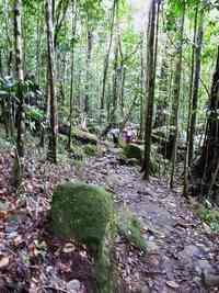 sentier, forêt, trois cornes, nord basse terre, guadeloupe