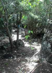 sentier trace bleue, Terre de Bas, Guadeloupe