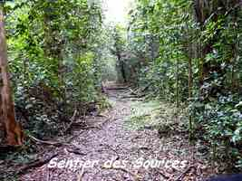 Sentier des Sources, Grand Bourg, Marie Galante