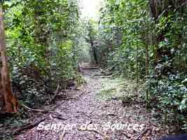 Sentier des Sources, Grand Bourg, Marie Galante
