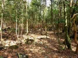 sentier forêt, trace jaune, terre de bas, Guadeloupe
