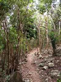 sentier foret Trace rouge , terre de Bas, Guadeloupe