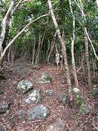 sentier trace bleue Terre de Bas Guadeloupe